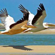 Natuur Senegal